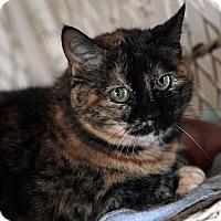 Adopt A Pet :: Gertie - St. Louis, MO