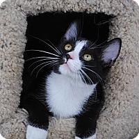 Adopt A Pet :: Sylvester - Palmdale, CA