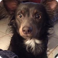 Adopt A Pet :: Jellybean - Edmond, OK