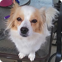 Adopt A Pet :: CINNAMON - Temecula, CA