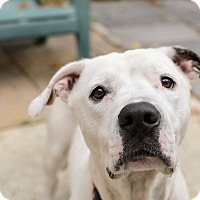 Adopt A Pet :: Elsa - Lancaster, PA