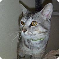 Adopt A Pet :: Cedric - Hamburg, NY