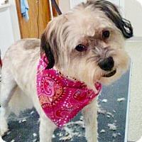 Adopt A Pet :: Morgan - Adoption Pending! - Hillsboro, IL
