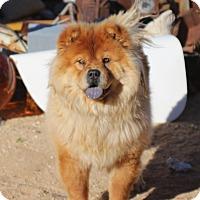 Adopt A Pet :: Boots - Eastsound, WA
