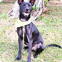 Adopt A Pet :: Uta - San Mateo, CA