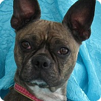 Adopt A Pet :: Blue - Cuba, NY