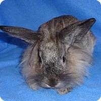 Adopt A Pet :: Jitterbug - Woburn, MA