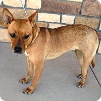 Adopt A Pet :: Reba - Artesia, NM