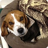 Adopt A Pet :: Willow - Geneseo, IL