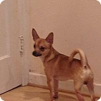 Adopt A Pet :: Chachi - Garwood, NJ