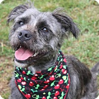 Terrier (Unknown Type, Medium) Mix Dog for adoption in Gibbstown, New Jersey - ZEENA