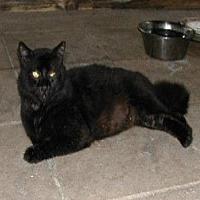 Adopt A Pet :: Jack - Naples, FL