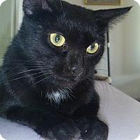 Adopt A Pet :: Belinda - Hamburg, NY