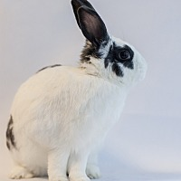 Other/Unknown Mix for adoption in Los Angeles, California - Ballerina