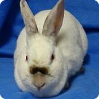 Adopt A Pet :: Paloma - Woburn, MA