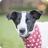 Adopt A Pet :: Shelby - Kingwood, TX