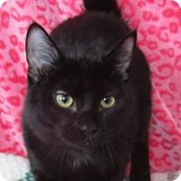 Adopt A Pet :: Neema - Lloydminster, AB