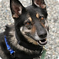 Adopt A Pet :: Echo - Bellingham, WA