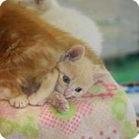 Adopt A Pet :: Miller - Dallas, TX