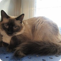 Adopt A Pet :: Pixie  $25 to adopt - North Richland Hills, TX