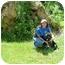 Photo 3 - German Shepherd Dog Mix Puppy for adoption in Kingwood, Texas - Petey