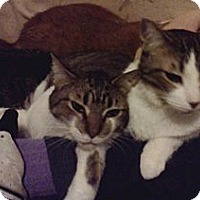 Adopt A Pet :: Sweet Sisters: Pam & Peggy - Lawrenceville, GA