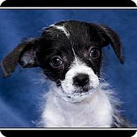 Adopt A Pet :: Zip - Fort Braff, CA