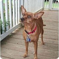 Adopt A Pet :: Fancye - Nashville, TN