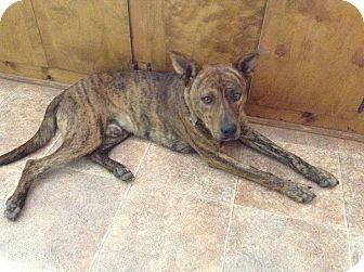 Labrador Retriever Mix Dog for adoption in Big Canoe, Georgia - The Dude