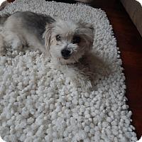 Adopt A Pet :: Katie - West Deptford, NJ