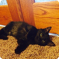 Adopt A Pet :: Bethany - Chesterfield Township, MI