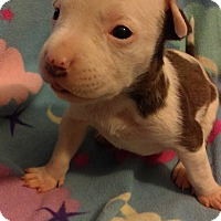 Adopt A Pet :: Nemesis (goddess of retributio - Sacramento, CA