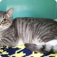 Adopt A Pet :: Sissy - Bellevue, WA