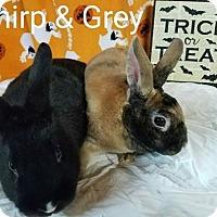 Adopt A Pet :: Gray and Chirp - Williston, FL
