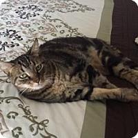 Adopt A Pet :: Leah - Visalia, CA