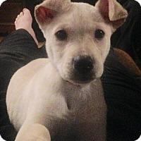 Adopt A Pet :: Reginald - Brooklyn Center, MN