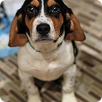 Adopt A Pet :: Maynard - Morganville, NJ