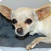 Adopt A Pet :: Coconut - Palm Springs, CA