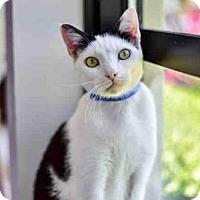 Adopt A Pet :: ALFIE - West Palm Beach, FL
