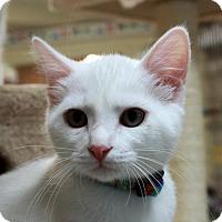 Adopt A Pet :: Paul - Waco, TX