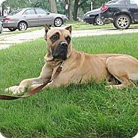 Adopt A Pet :: Armani - Lapeer, MI