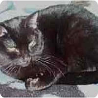 Adopt A Pet :: Tommie - Little Rock, AR