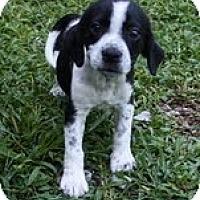 Adopt A Pet :: Dottie - Staunton, VA