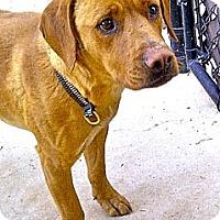 Adopt A Pet :: Brady - Escondido, CA