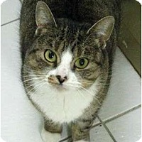 Adopt A Pet :: Abigail - Markham, ON