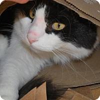Adopt A Pet :: Sawyer - Prescott, AZ