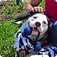 Adopt A Pet :: Ali - Reisterstown, MD