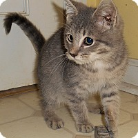 Adopt A Pet :: Brody - Chattanooga, TN