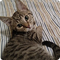 Adopt A Pet :: Joshua - Richmond, VA