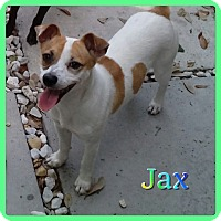 Adopt A Pet :: Jax - Hollywood, FL